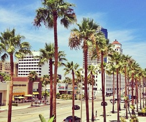 summer, palms, and city image