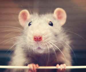 mouse, cute, and sweet image