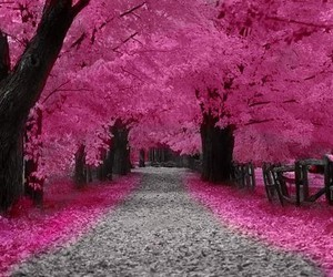 aesthetic, pink aesthetic, and pink image