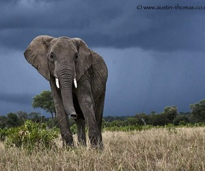 elephant and nature image