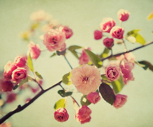 flowers, love, and letsescape image