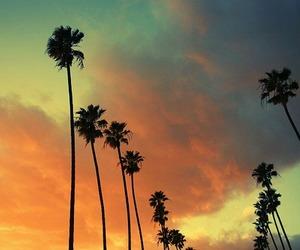 palm trees, sky, and sun image