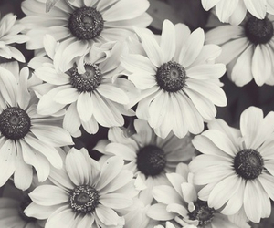 black and white, daisy, and blanc et noir image