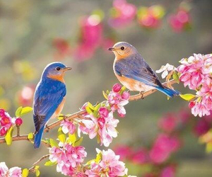 bird, flowers, and spring image