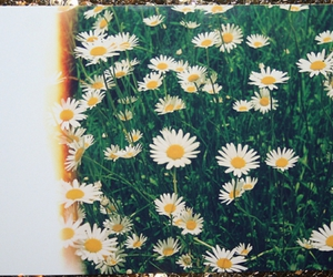 flowers, daisy, and pretty image