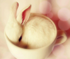 pink, cute, and rabbit image