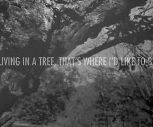 tree, life, and quotes image