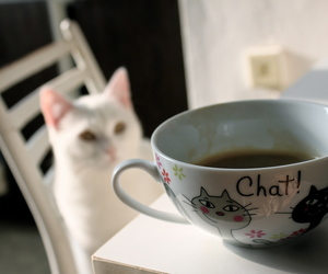breakfast, cafe, and cats image
