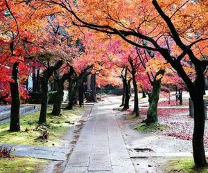 trees, autumn, and nature image