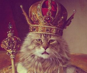 cat, crown, and sweet image