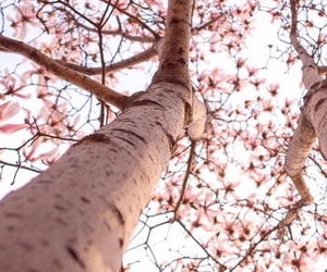 flower, pink, and tree image