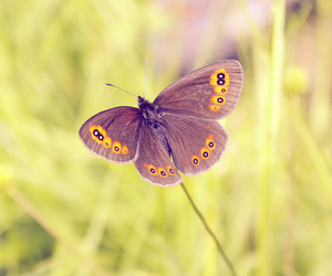 animal, butterfly, and fly image