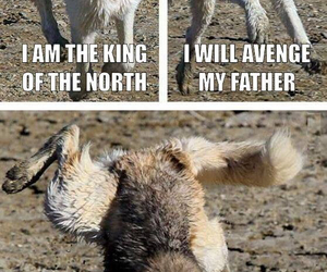 funny, wolf, and game of thrones image