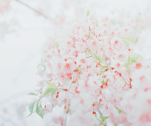 flowers, cute, and nature image