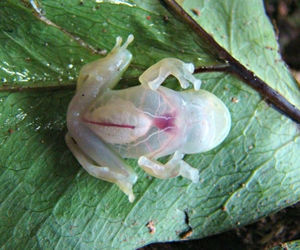 frog and transparent image