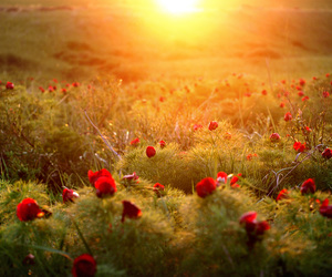 flowers, field, and sun image