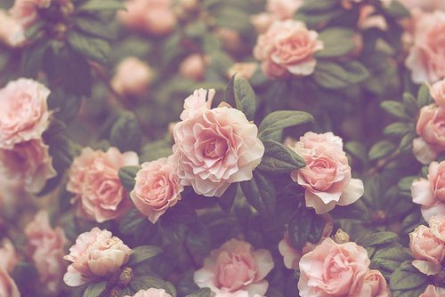 78 Images About Flowers D On We Heart It See More About Flowers