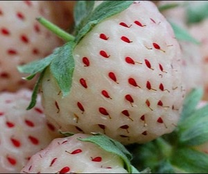 strawberry, white, and fruit image
