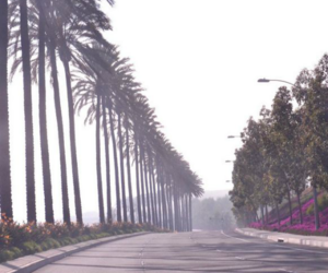 california, palm trees, and palms image