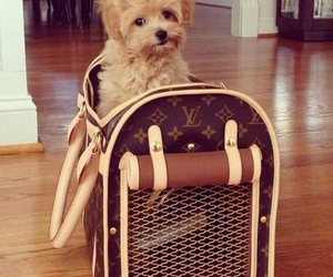 LV, puppy, and cute image
