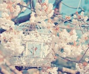 bird cage, pink, and spring image