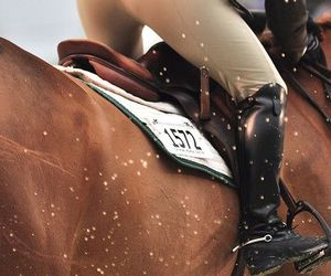 equestrian, jumping, and horse image