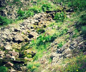 green, nature, and rocks image