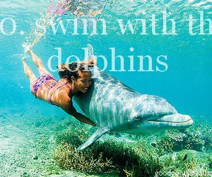 blue, dolphin, and girl image