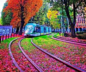 colors, train, and flowers image
