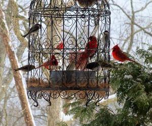 bird and nature image