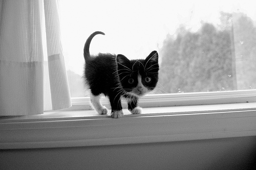 kitten, kitty, and black and white image