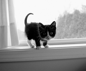 black and white, kitten, and kitty image
