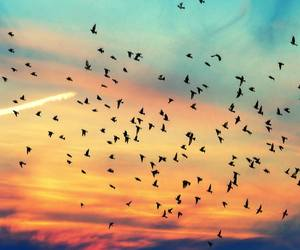 beauty, birds, and blue image