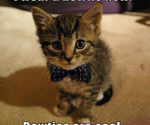 cat, cute, and bowtie image