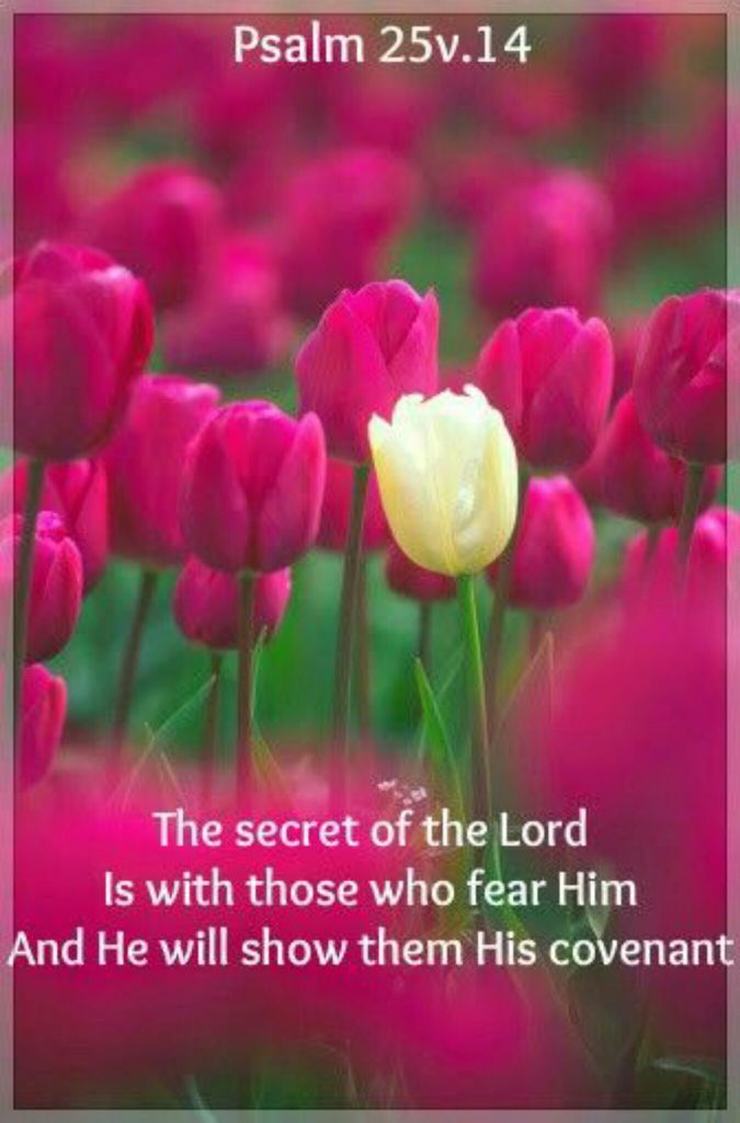 god, bible verses, and fear of the lord image