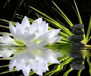flower, water, and lotus image