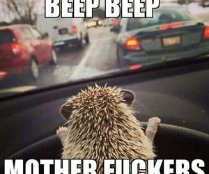 car, driving, and funny image