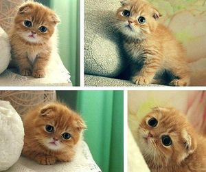 adorable, cat, and kittens image