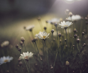 flowers, nature, and pretty things image