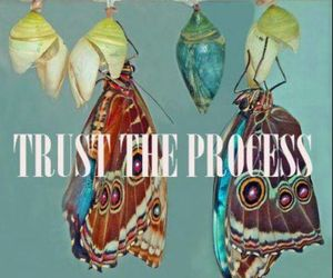 butterflys, PROCESS, and trust image
