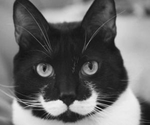 cat, moustache, and mustache image