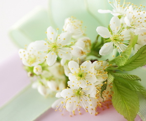 beautiful, spring, and cute image