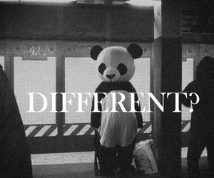 different, panda, and black and white image