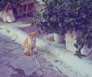 Athens, cat, and Greece image