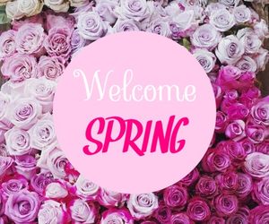 spring, pink, and rose image