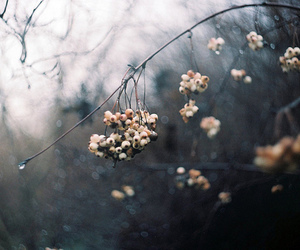 photography, beautiful, and nature image
