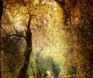 enchanted forest and pathway image