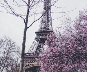 flowers, love, and paris image
