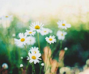 flowers, vintage, and summer image
