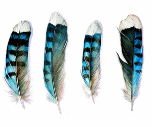 feather and blue image